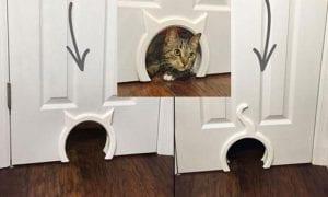 10 Best Cat Doors