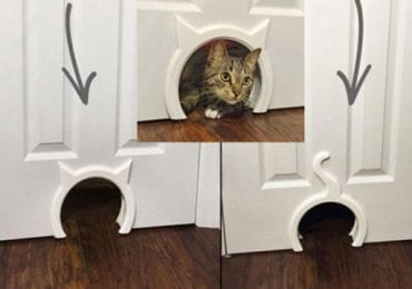 10 Best Cat Doors