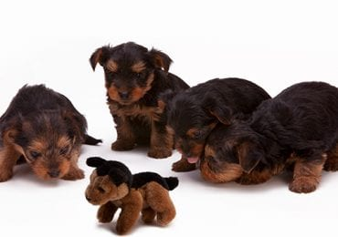 12 Best Chew Toys for Puppies