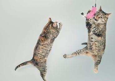 10 Cat Chew Toys