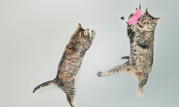 10 Cat Chew Toys for Healthy Teeth
