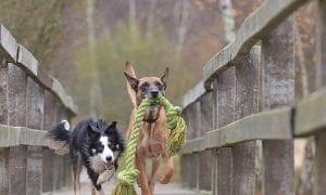 10 Durable Dog Toys