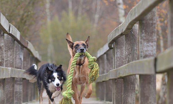 9 Durable Dog Toys that Stand the Test