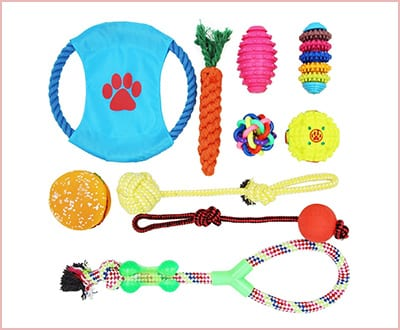 10 pack toy set for small and medium dogs