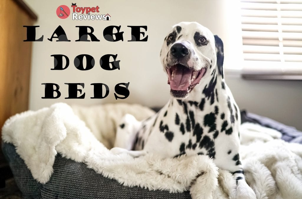 9 Great Large Dog Beds for Your Big Doggo