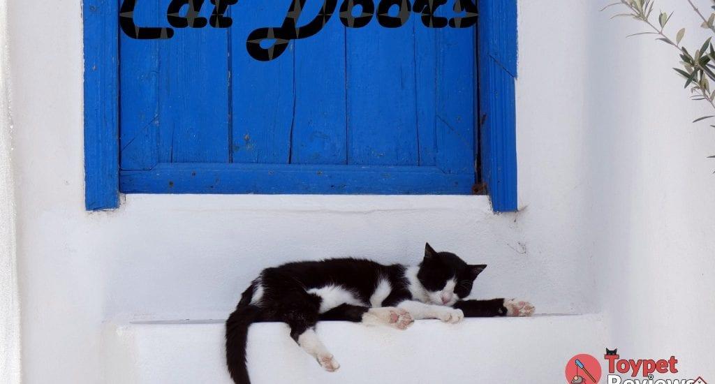 cat sleeping in front of door