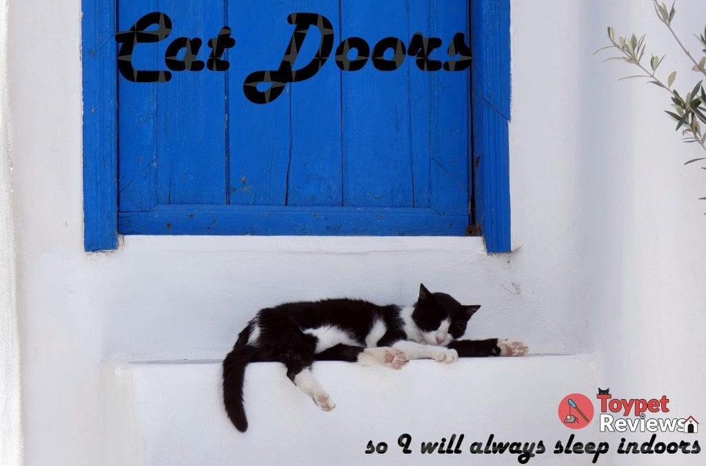 7 Great Cat Doors for Increased Feline Mobility