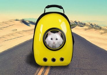 10 Best Cat Backpacks
