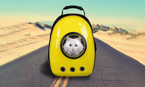 10 Best Cat Backpacks that Have Your Back