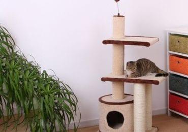 10 Best Cat Condos