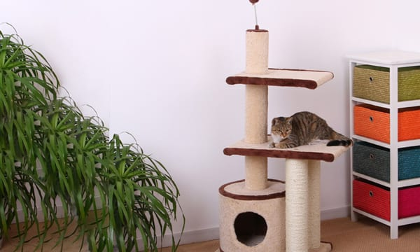 8 Great Cat Condos for them to Nap In