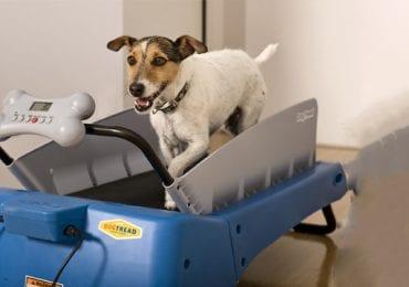 10 Best Dog Treadmills