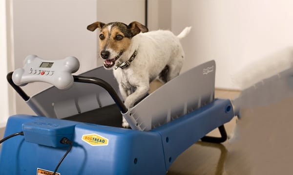 5 Best Dog Treadmills to Keep Them Running!
