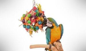13 Best Parrot Toys