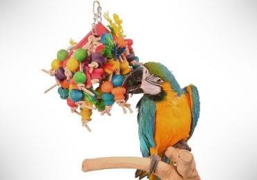 12 Best Parrot Toys