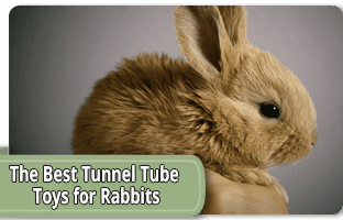 The best tunnel tube toys for rabbits