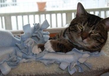 10 Best Cat Perches