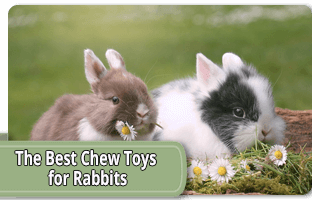 The best chew toys for rabbits