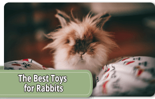 The best toys for rabbits