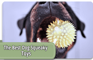 The best dog squeaky toy