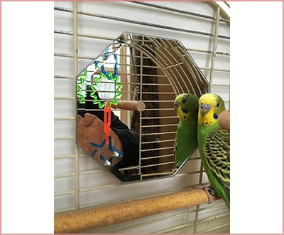 5 inch glass mirror with beveled edges parakeet toys