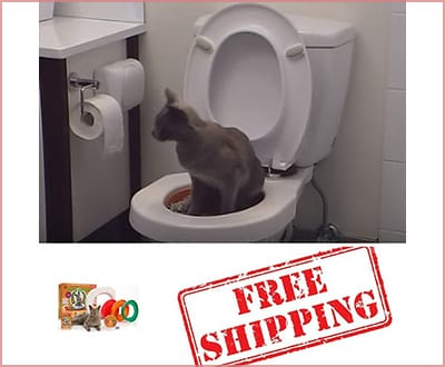 how to train your cat by Rio center toilet training kit