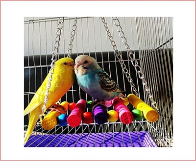 Parakeet hammock cage swing colorful