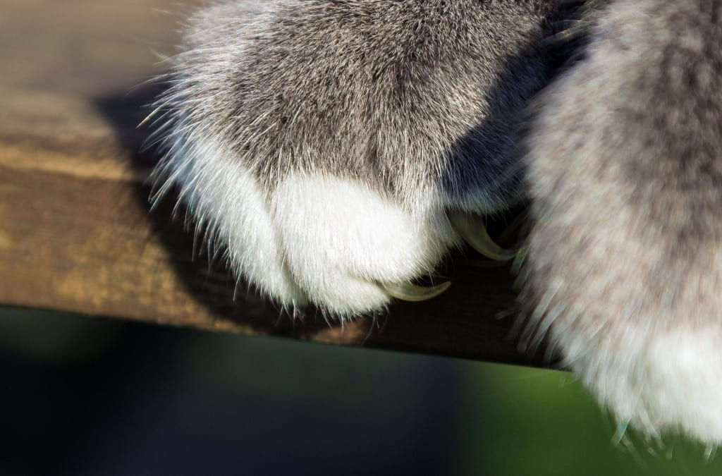 8 Cat Scratching Posts for Keeping those Claws Sharp
