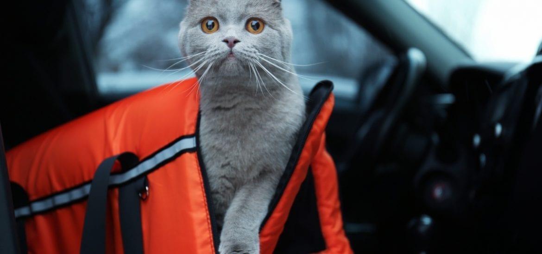 cat in cat carrier in car
