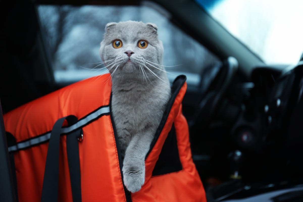 10 Best Cat Carriers for Ease of Feline Transport