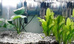 7 Best Aquarium Heaters for Living at the Perfect Temperature