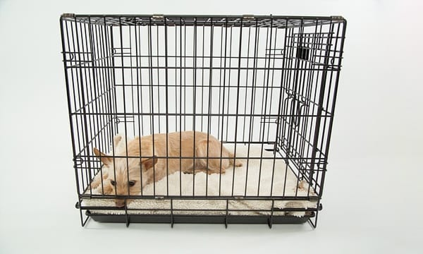 10 Best Dog Crates for Your Furry Friend