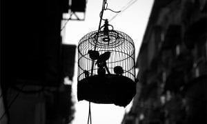 10 Best Bird Cages featured image