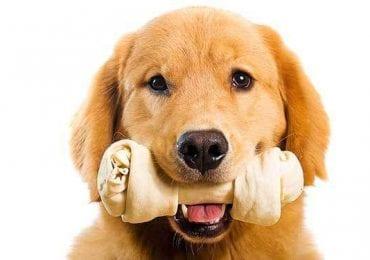 12 Best Bones for Dogs