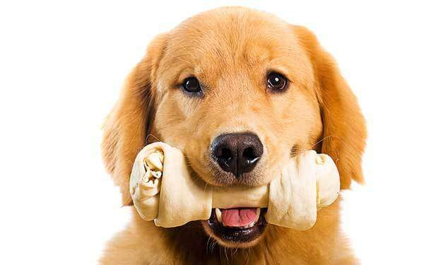 11 Best Bones for Dogs to Chew On