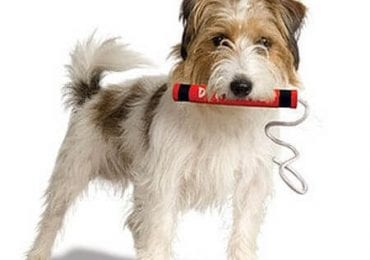 best tuffy dog toys