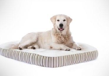 10 Best Dog Beds