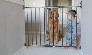 10 Best Dog Gates