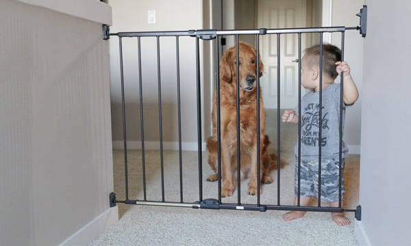10 Best Dog Gates to Keep Them Safe