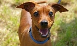 10 Best Dog Leashes