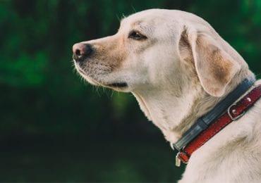 10 Best Dog Collars