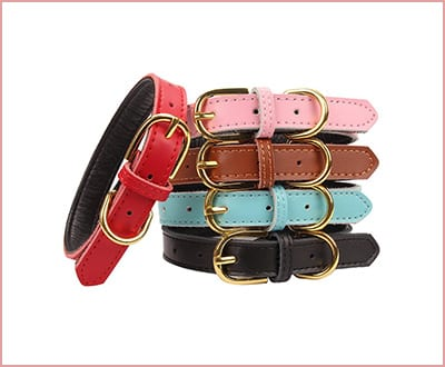 Aolove Basic padded leather pet collar for dogs