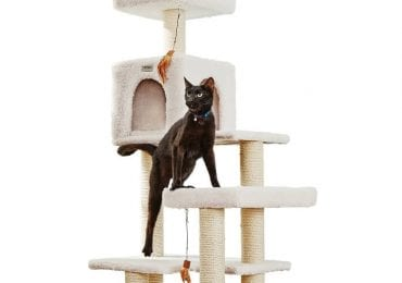 10 Best Cat Trees