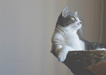 7 Best Cat Trees for Her Majesty, Your Feline Friend