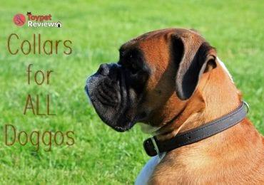 dog wearing dog collar