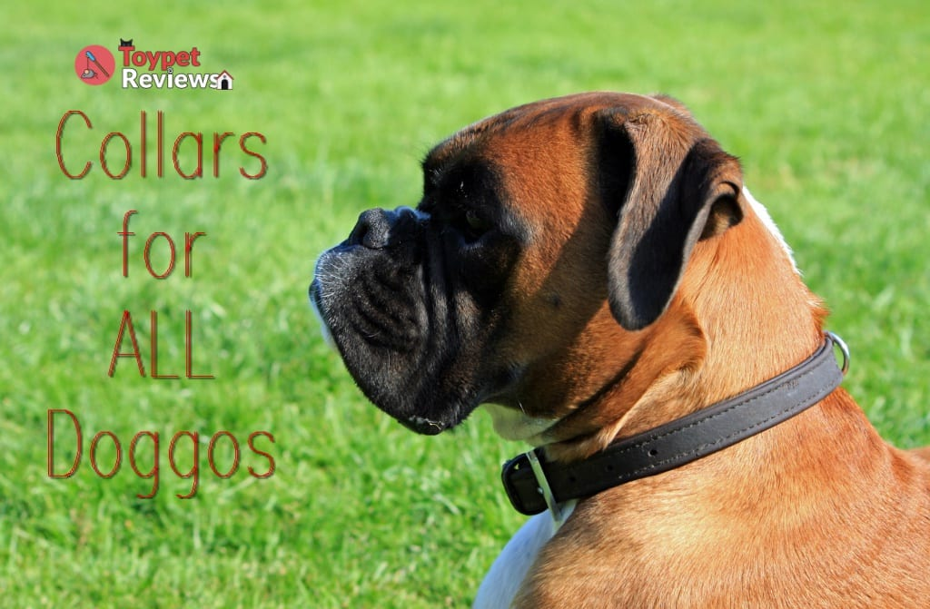 9 Best Dog Collars for Walking Your Pet