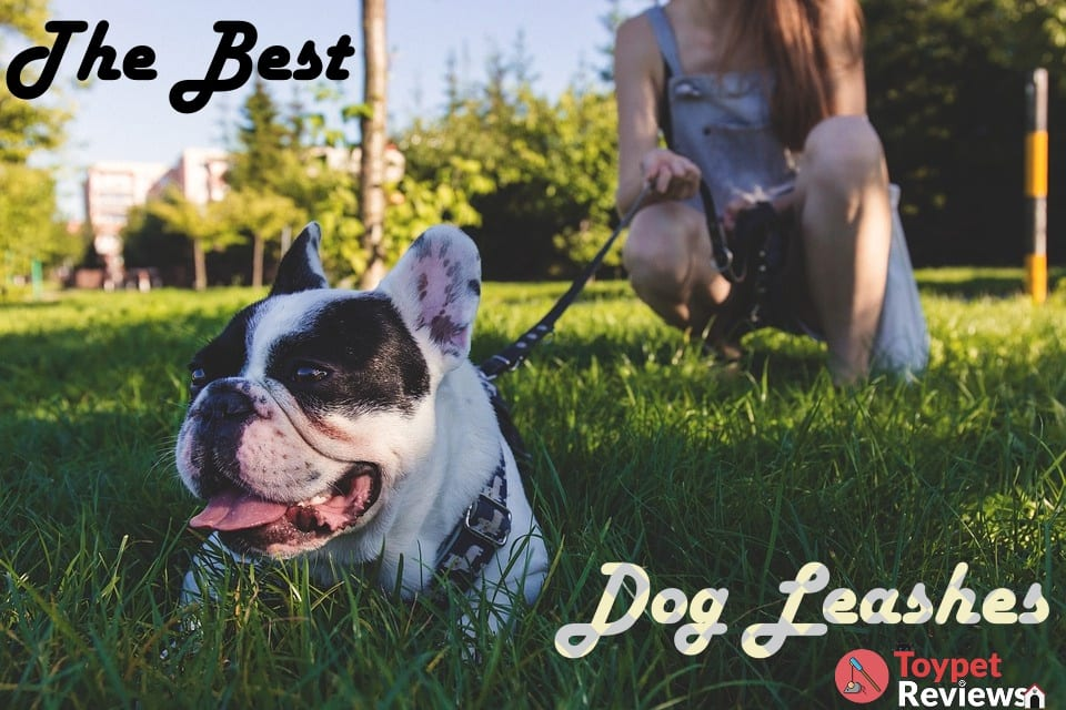 10 Best Dog Leashes for Walking or Running with Them