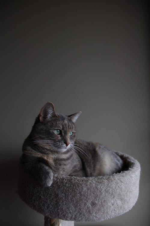 grey cat sitting in a grey condo