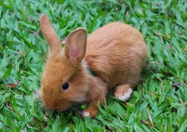 11 Best Chew Toys for Rabbits