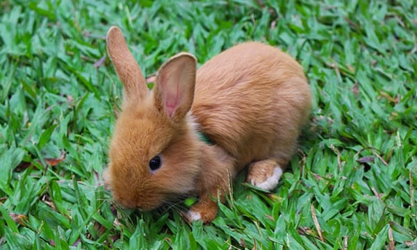 11 Best Chew Toys for Your Rabbits and Their Teeth